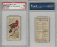 N23 Allen & Ginter, Song Birds of the World, 1890, Amandava, PSA 1.5 Fair
