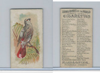N23 Allen & Ginter, Song Birds of the World, 1890, Bengali