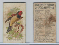 N23 Allen & Ginter, Song Birds of the World, 1890, Black-Breasted Barbet