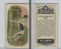 C40 British American Tobacco, Animals, 1916, #1 Borzo Russian Wolf-Hound