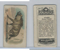 C40 British American Tobacco, Animals, 1916, #2 Hyena