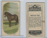 C40 British American Tobacco, Animals, 1916, #10 Shetland Pony