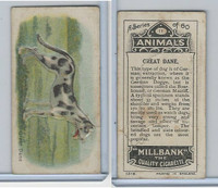 C40 British American Tobacco, Animals, 1916, #11 Great Dane
