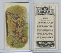 C40 British American Tobacco, Animals, 1916, #12 Cheetah
