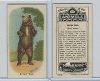 C40 British American Tobacco, Animals, 1916, #16 Brown Bear