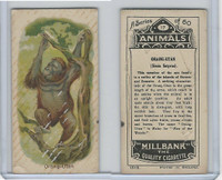 C40 British American Tobacco, Animals, 1916, #17 Orang-Utan