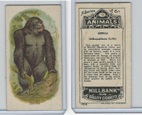 C40 British American Tobacco, Animals, 1916, #18 Gorilla