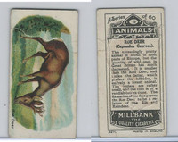 C40 British American Tobacco, Animals, 1916, #19 Roe Deer