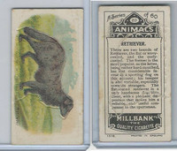 C40 British American Tobacco, Animals, 1916, #20 Retriever, Dog