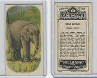 C40 British American Tobacco, Animals, 1916, #21 Indian Elephant