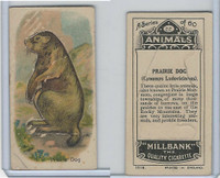 C40 British American Tobacco, Animals, 1916, #22 Prairie Dog