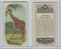 C40 British American Tobacco, Animals, 1916, #23 Giraffe