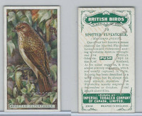 C4 Imperial Tobacco, British Birds, 1923, #10 Spotted Flycatcher