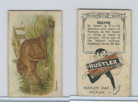H0-0 Hustler Soap, Animals 2nd Series, 1925, #6 Beaver