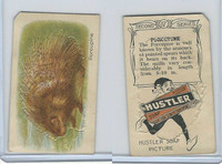 H0-0 Hustler Soap, Animals 2nd Series, 1925, #17 Porcupine