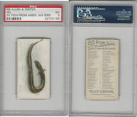 N8 Allen & Ginter, Fish From American Waters, 1889, Eel, PSA 3 VG