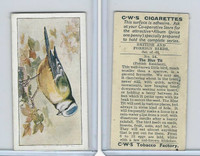 C130-24 CWS, British & Foreign Birds, 1938, #24 Blue Tit