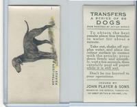 P72-91B Players - Transfers, Dogs, 1931, Bedlington Terrier