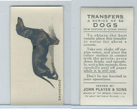 P72-91B Players - Transfers, Dogs, 1931, Dachshund