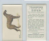 P72-91B Players - Transfers, Dogs, 1931, Irish Wolfhound