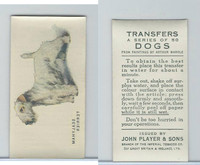 P72-91B Players - Transfers, Dogs, 1931, Sealyham Terrier