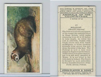P72-153 Player, Animals of Countryside, 1939, #17 Polecat