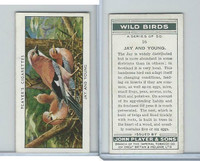 P72-142 Player, Wild Birds, 1932, #16 Jay and Young
