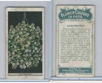 C13 Imperial Tobacco, Flower Culture, 1925, #1 Achimenes