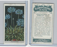C13 Imperial Tobacco, Flower Culture, 1925, #2 Agapanthus  African Lilly