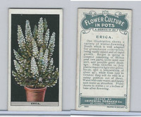 C13 Imperial Tobacco, Flower Culture, 1925, #22 Erica