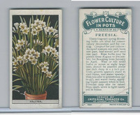C13 Imperial Tobacco, Flower Culture, 1925, #23 Freesia