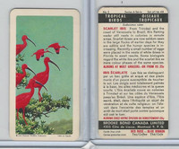 FC34-8 Brooke Bond, Tropical Birds, 1964, #2 Scarlet Ibis
