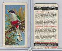 FC34-8 Brooke Bond, Tropical Birds, 1964, #19 Cuban Trogon