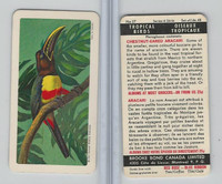 FC34-8 Brooke Bond, Tropical Birds, 1964, #27 Chestnut-Eared Aracari