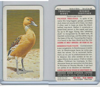 F450-5 Brooke Bond, Tropical Birds, 1964, #6 Fulvous Tree Duck