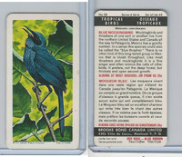 F450-5 Brooke Bond, Tropical Birds, 1964, #38 Blue Mockingbird