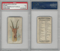N25 Allen & Ginter, Wild Animals, 1888, Eland, PSA 3 VG