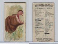 N25 Allen & Ginter, Wild Animals, 1888, Hippopotomus