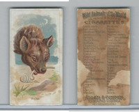N25 Allen & Ginter, Wild Animals, 1888, Hyena