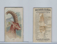 N25 Allen & Ginter, Wild Animals, 1888, Ibex