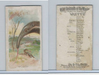 N25 Allen & Ginter, Wild Animals, 1888, Ant Eater