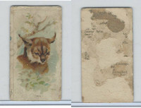 N25 Allen & Ginter, Wild Animals, 1888, Lynx