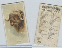 N25 Allen & Ginter, Wild Animals, 1888, Musk Ox