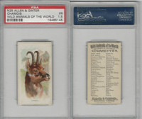 N25 Allen & Ginter, Wild Animals, 1888, Chamois, PSA 1.5 Fair
