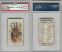 N25 Allen & Ginter, Wild Animals, 1888, Chamois, PSA 2 Good