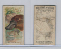 N25 Allen & Ginter, Wild Animals, 1888, Duck-Billed Platypus