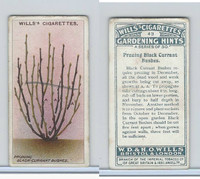 W62-143 Wills, Gardening Hints, 1923, #43 Pruning Black Currant Bushes