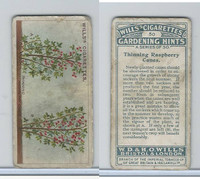 W62-143 Wills, Gardening Hints, 1923, #50 Thinning Raspberry Canes