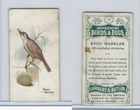 L8-23 Lambert, Birds & Eggs, 1906, #18 Reed Warbler