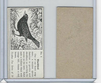 T0-0 Typhoo Tea, Common British Birds, 1955, #4 Blackbird